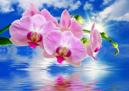 Fototapet, Orhidee roz și un peisaj marin
