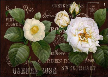 Fototapete, Un trandafir alb pe un fundal maro