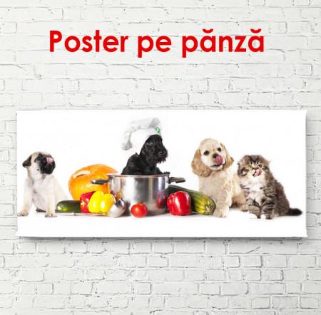 Poster, Animale de companie pe un fundal alb