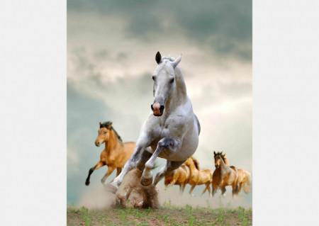 Fototapet Animale, Cai în galop