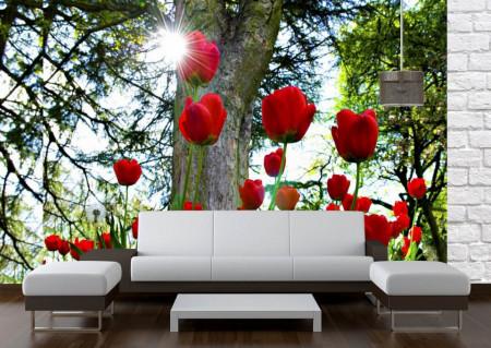 Fototapet Flori si Plante, Lalele roșii în parc