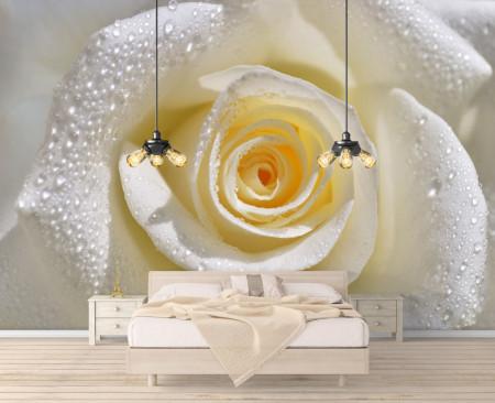 Fototapet, Trandafir cu picături de rouă pe petale