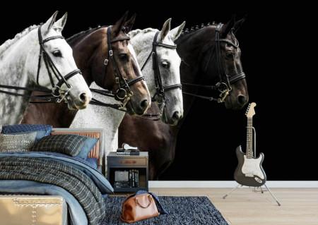 Fototapete, Cai albi și negri
