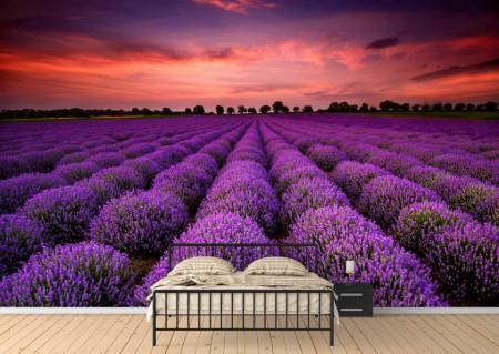 Fototapete Câmp cu lavandă