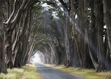 Fototapete Drumul înțelepților