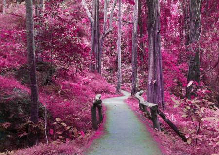 Fototapete, Pădure roz