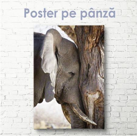 Poster, Elefantul trist