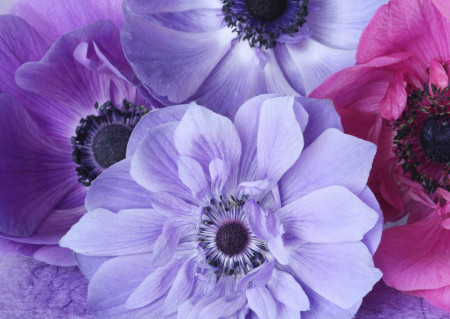 Fototapete, Gânduri violet