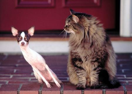 Fototapet Animale, Câinele și pisica prieteni