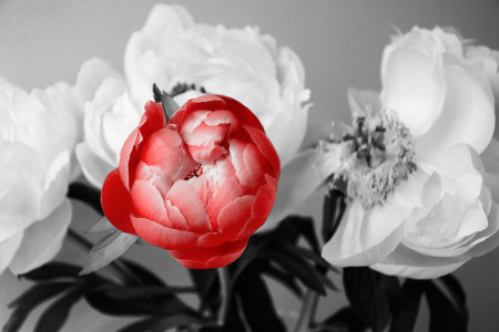 Fototapet, Flori albe pe o ramură pe un fundal albastru