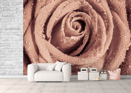 Fototapet, Un trandafir frumos