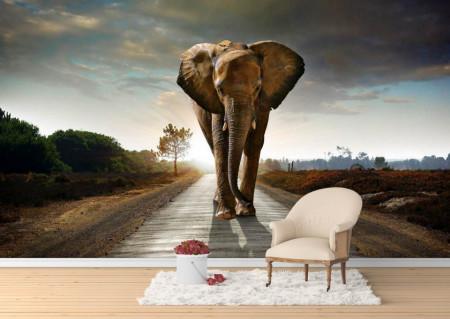 Fototapete, Elefant pe stradă