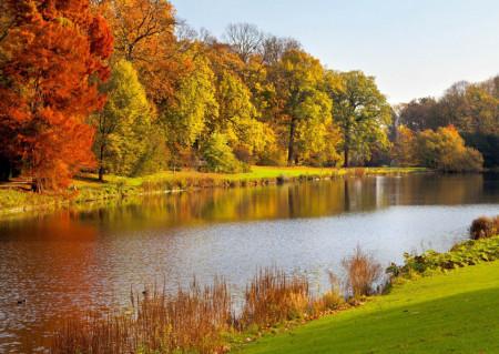 Fototapete Râu și pădure de toamnă
