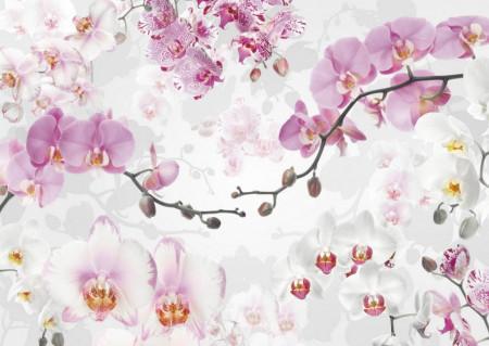 Fototapet, Crenguța cu orhidee roz