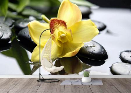 Fototapete, O floare pe niste pietre negre