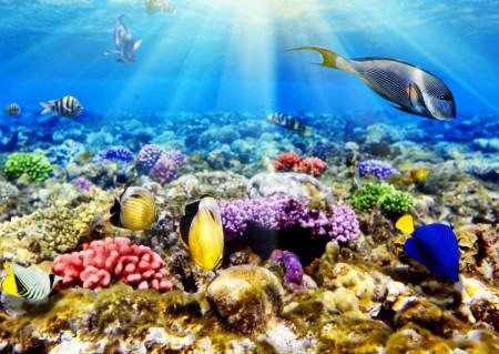 Fototapete, Razele solare sub apă
