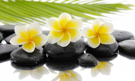 Multicanvas, Flori galbene pe pietre negre.