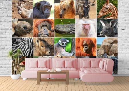 Fototapet, Animale exotice