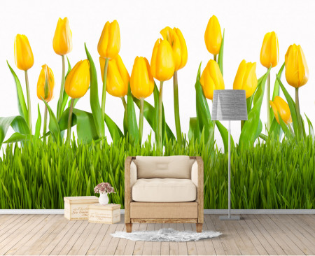 Fototapet Flori si Plante, Lalele galbene pe fond deschis