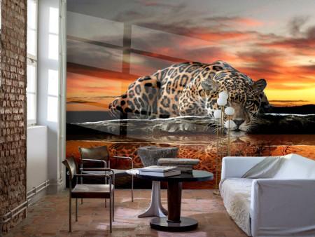 Fototapet, Leopardul bea apă la apus