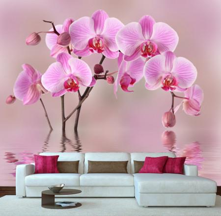 Fototapete, Frumoasă orhidee roz pe un fundal roz în reflectarea apei