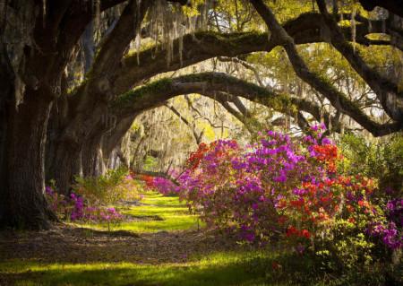 Fototapete Pădure de primăvară