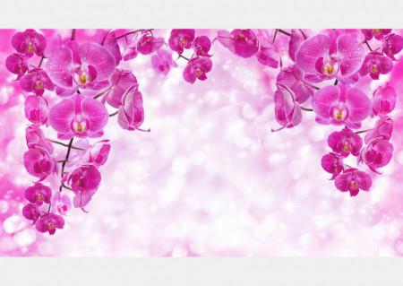 Fototapet, Orhidee ciclamen