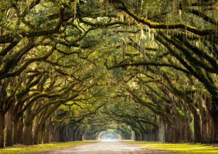 Fototapete, Pădure fermecată