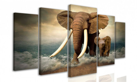 Multicanvas, Elefanți