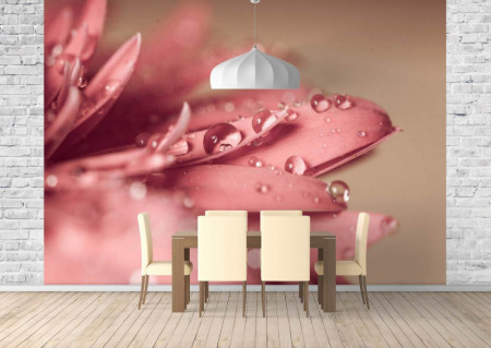 Fototapet, Bruma dimineții pe petalele roz