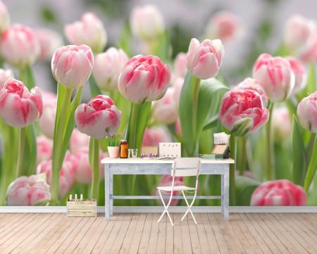 Fototapet, Câmp de lalele roz