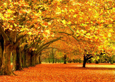 Fototapet Natura, Peisaje, Pădure galbenă
