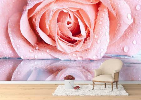 Fototapet, Reflexia trandafirului bej