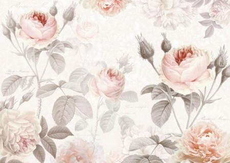 Fototapete, Trandafiri bej pe fundal alb