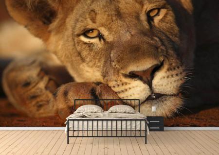 Fototapet Animale, Tigroaică tristă