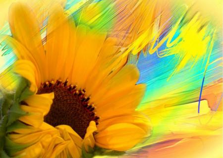 Fototapet, Floarea soarelui
