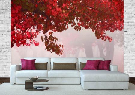 Fototapete Copaci cu frunze roșii