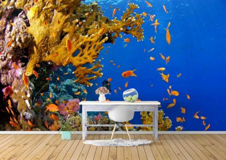Fototapet, Minunile lumii subacvatice