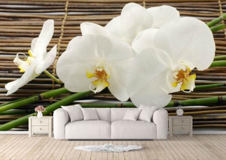 Fototapet, Orhidee albe frumoase