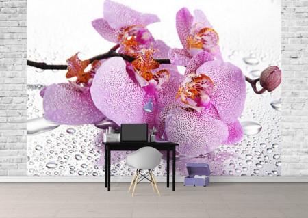 Fototapet, Orhidee roz și picături de apă
