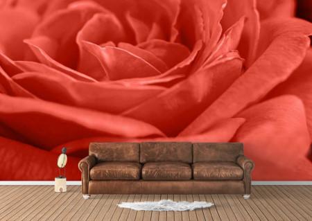 Fototapet, Trandafir roșu închis