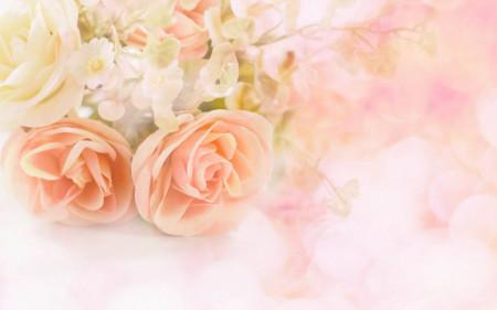 Fototapet, Trandafiri pastelați