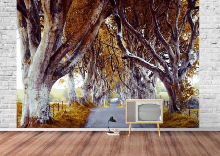 Fototapete, Copaci înalți