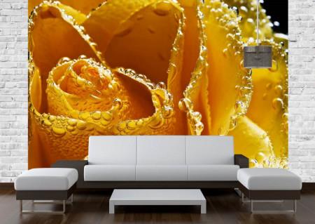 Fototapete, Trandafir galben și picături de apă