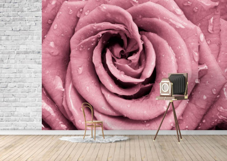 Fototapete, Trandafir roz și picături de apă