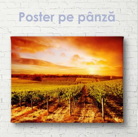 Poster, Vițe de vie pe fundalul unui apus de soare aprins