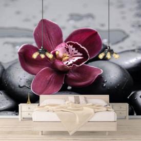 Fototapet, Orhidee bordeaux