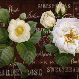 Fototapet, Un trandafir alb pe un fundal maro