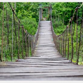 Fototapete, Pod din pădure