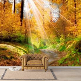 Fototapete Razele soarelui în pădure